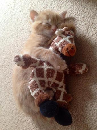 giraffe cat